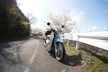 DSC00774_11mm.jpg